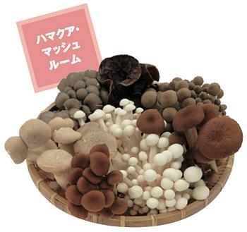 HamakuaMashroom_400.jpg