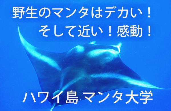title_32-6MantaDaigaku_Mantaswim.jpg