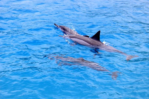 dolphinesweb.jpg