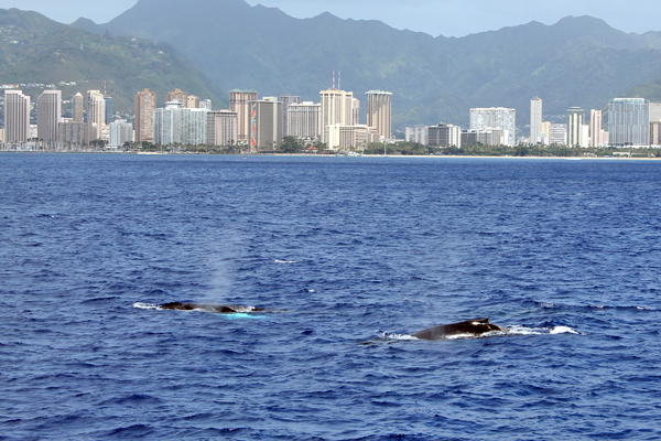 WhaleWatch1706.jpg