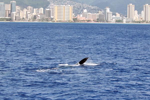 WhaleWatch1707.jpg