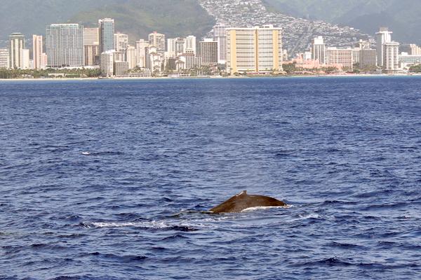 WhaleWatch1708.jpg