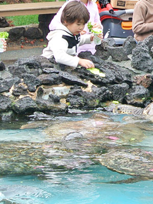 sealife-honu.jpg