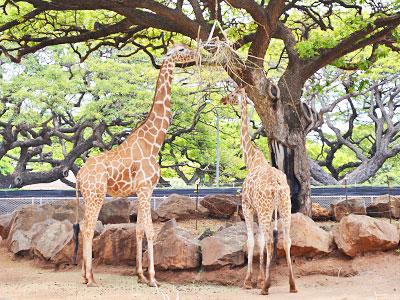 zoo20140605-02.jpg