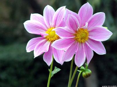 pair-flowers00.jpg