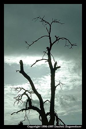 tree-dying-00.jpg