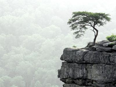 tree-lonely-00.jpg