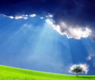 tree-with-light-00.jpg