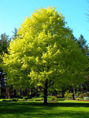 tree2-00.jpg