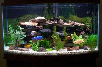 fish-tank-1_300.jpg