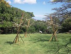 bamboo001.jpg