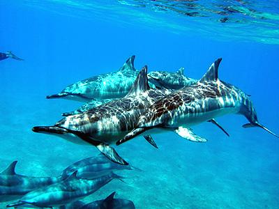 dolphin-activity.jpg