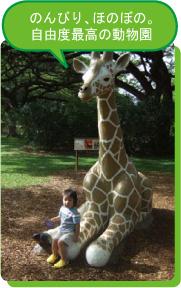 のんびり、ほのぼの。自由度最高の動物園