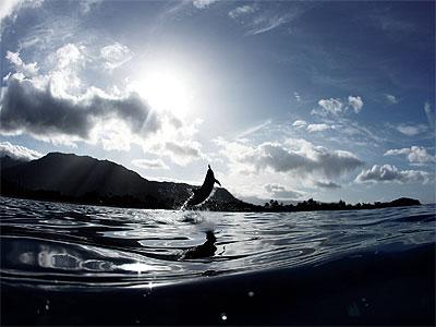 dolphin you.jpg