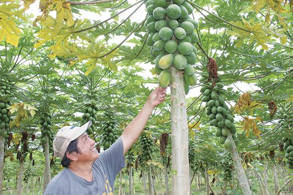 35_5AD_papaya_0384_600.jpg