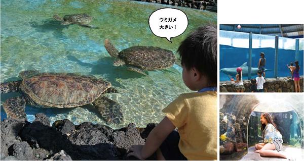 SeaLifePark1.jpg