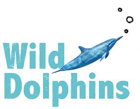 WildDolphins.jpg