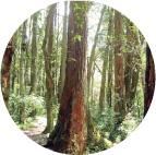 マノアの森