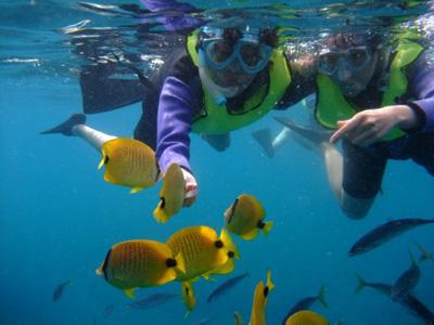 tropical fish1.jpg