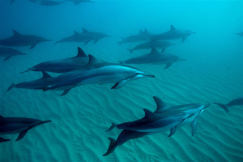 dolphin02.jpg