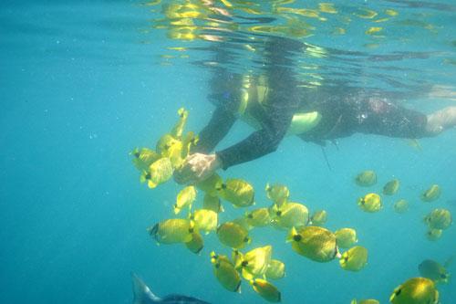 yellowfishes.jpg