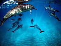 Dolphin&you.jpg