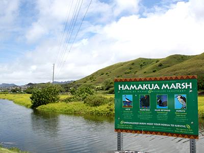 Hamakua Marsh_400.jpg