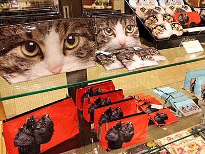 catch_cat.jpg