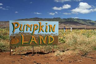 pumpkin_400.jpg