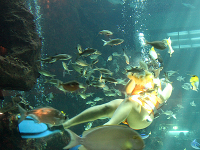 31-2_Oceanarium_diving_400.jpg