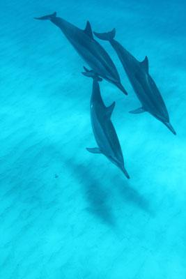 Dolphin&You2.jpg