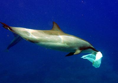 Dolphin-You.jpg