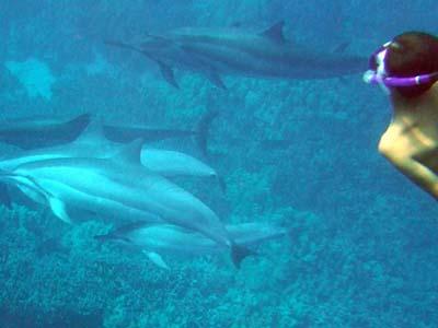 DolphinAcJul14-3.jpg