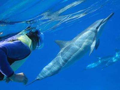 DolphinYouJun14-2.jpg