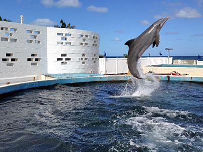 SeaLifeJan14-1.jpg