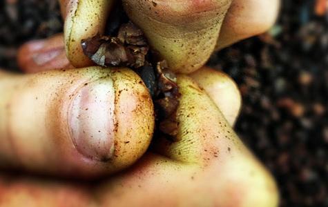 cacao2_400.jpg