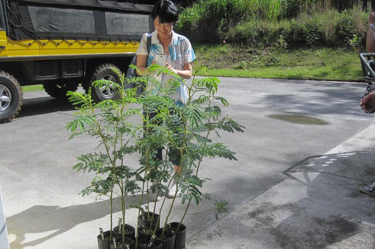 私達が植樹したコアの苗木。ひょろひょろっとかわいらしい