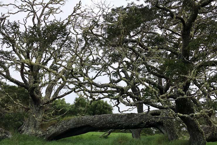 聖なる山にあるコアの大木。特別な存在感を誇る