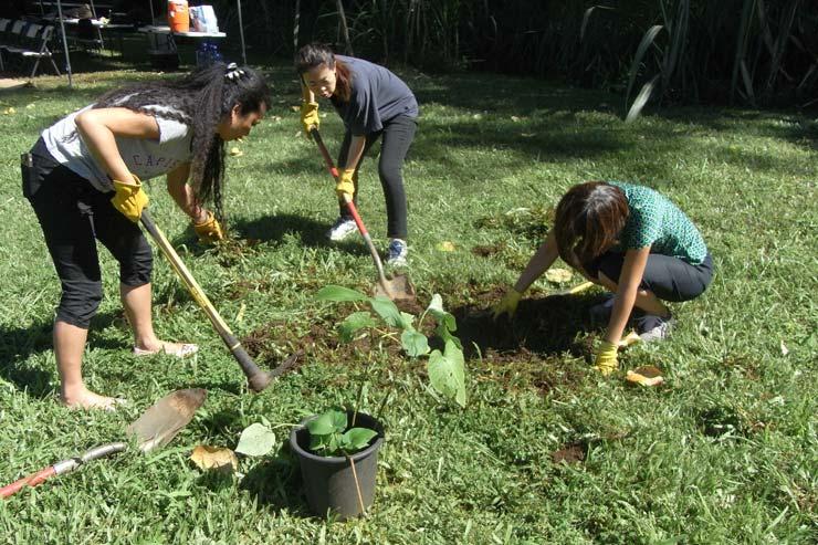 強い日差しの中、タロイモ畑(ロイカロ)の近くに苗を植える穴を掘ります。汗びっしょり!