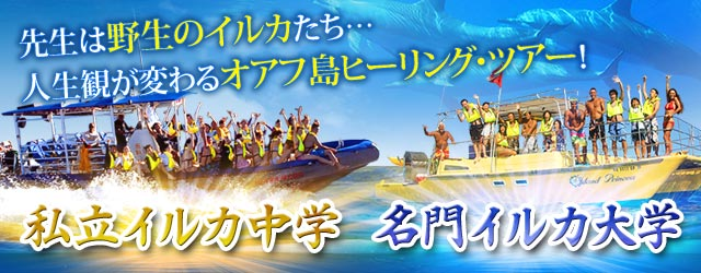 オアフ島で野生のイルカと泳ぐ感動ツアー!