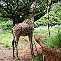 久々のホノルル動物園で癒しのひと時