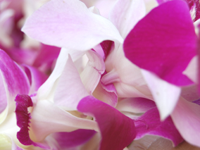 ハワイで祝う華やかなレイの祭典