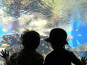 ハワイで水族館?