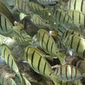 水中カメラで熱帯フィッシュを激写