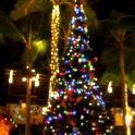 南国のクリスマスツリー、美しく点灯!