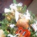 ハワイから、クリスマスツリーの国へ