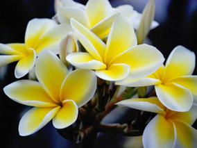 アロハ風水〜春はキャリアの花も咲く!