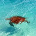 エメラルドの海に感動!夢のサンドバー体験