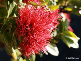 「フラ」と「ハワイの自然」の素敵な関係