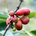 動物いっぱい!コナコーヒー農園を見学
